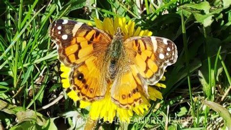 monarch color colors of a monarch