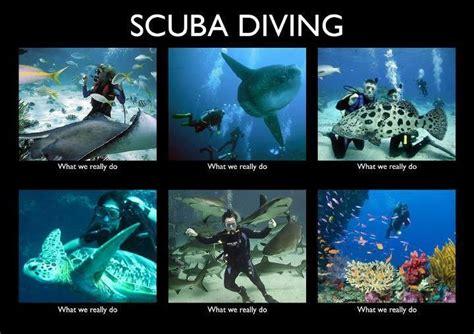 Scuba Meme - scuba divers what we really do are you for scuba
