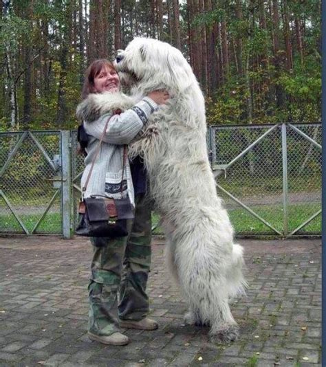 dogs dogs pretty big dogs dogs dogs