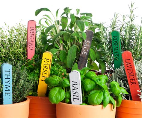 fresh planted herbs gastronomy pinterest tips for cooking with fresh herbs and keeping them fresh