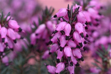 fiori da giardino autunnali fiori autunnali non sprecare