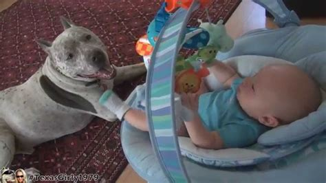 nanny dogs 8 reasons why pit bull might be the pet for you cuteness overflow