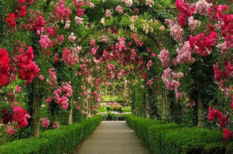 wallpaper bunga paling cantik pelik dan aneh taman bunga paling cantik di dunia