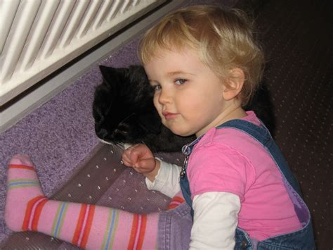 2 year old short haircut smlpx natural science cat dsh black and white about