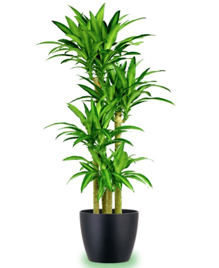 inhouse plants indoor plants uk indoor plants best position and best