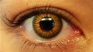 brown eye color light brown gallery