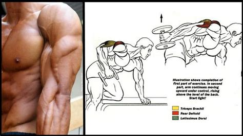 the best tricep exercise routine for big triceps