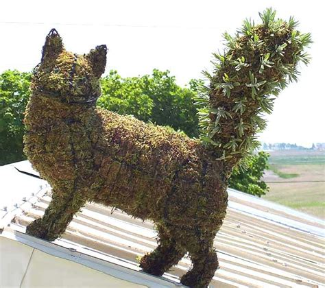 topiary cat topiary cat for the home