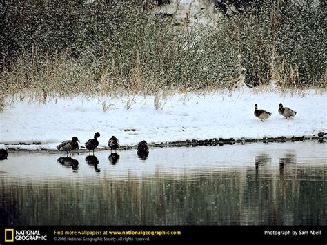 national geographic pictures birds scenery