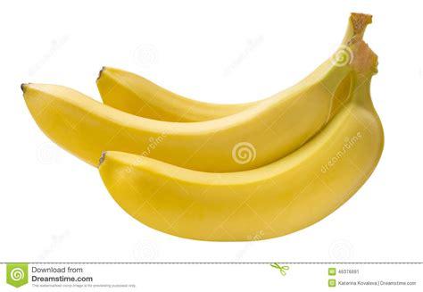 tiny banana small banana bunch on white background stock photo image