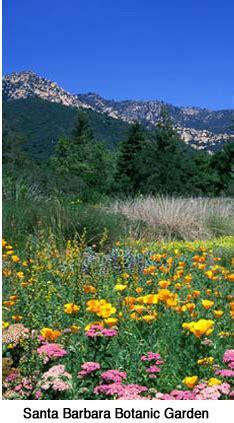 Santa Barbara Botanic Gardens Santa Barbara Sights And Events