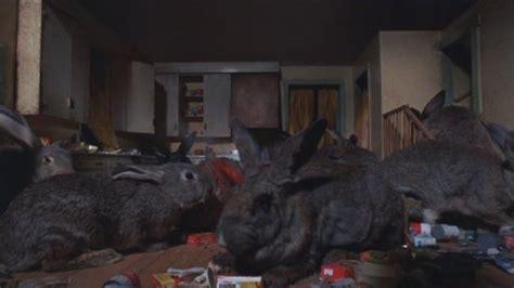 film giant rabbit tmp quot alien quot rabbits quot anyone quot topic