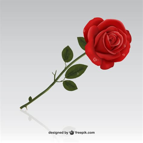 imagenes de rosas rojas descargar gratis rosa roja descargar vectores gratis