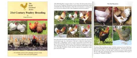 21st century poultry books 21st century poultry book review