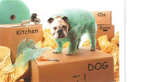 when can you feel puppies move in 5 when moving with dogs h2h movers