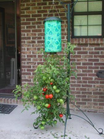 Diy Hanging Tomato Planter by Diy Topsy Turvy Tomato 174 Planter One Thing By Jillee