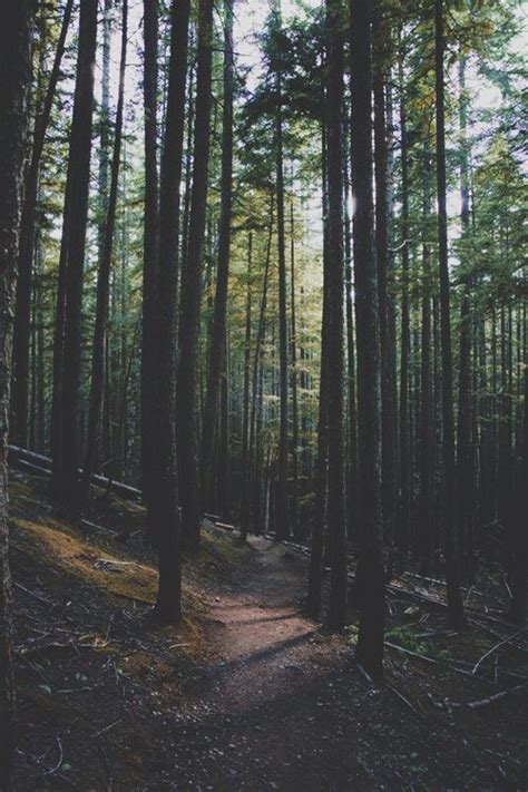wallpaper iphone forest forest iphone wallpaper backgrounds pinterest