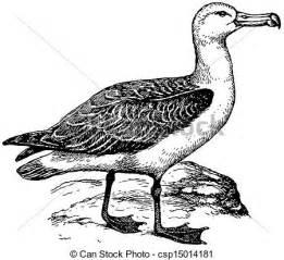 Vecteur De Albatros Oiseau Laysan  sketch template
