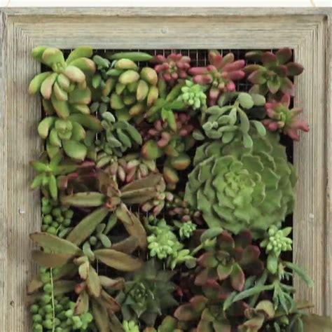 succulent wall garden best 25 succulent wall ideas on succulent