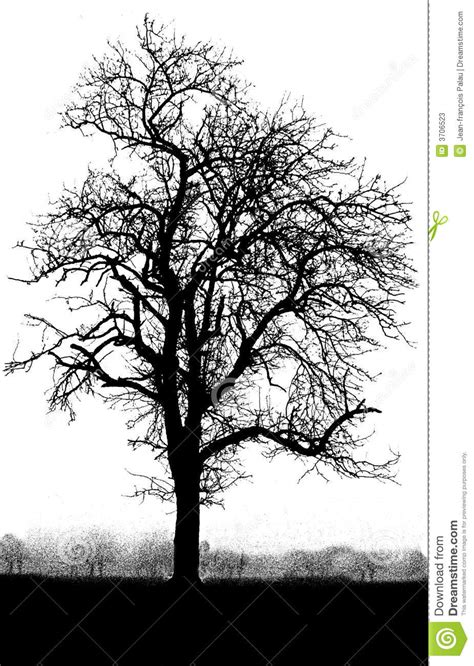 black and white tree images black and white tree stock photos image 3706523
