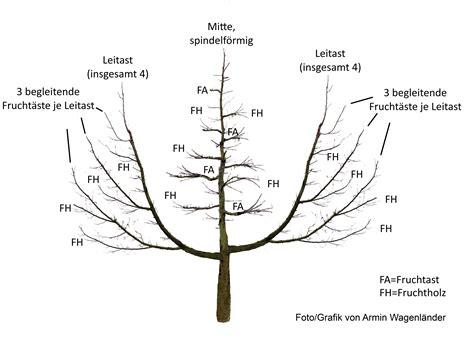obstbaumschnitt wann datei oeschberg palmer musterbaum jpg