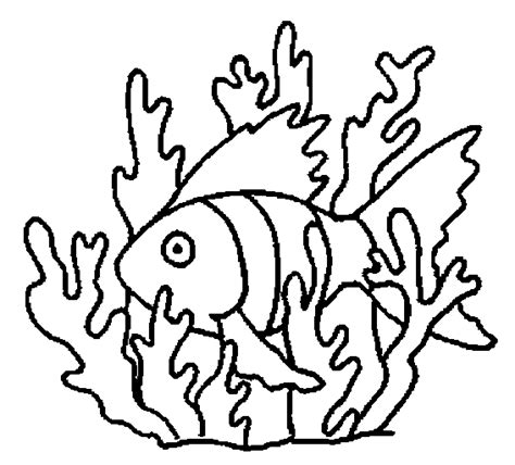 shells seaweed coloring pages coloring pages coloring pages
