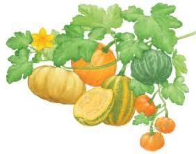 All about growing pumpkins organic gardening mother earth news