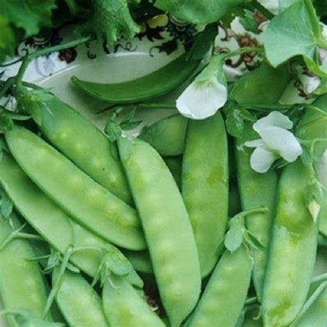 grey sugar snow pea seeds buy in packets or bulk