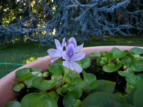 rospi in giardino rospi in dolce attesa pagina 2 forum giardinaggio