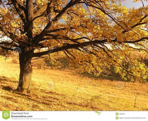 paisaje de otoo serie paisaje del oto 241 o con el 225 rbol 2 foto de archivo libre de regal 237 as imagen 536345
