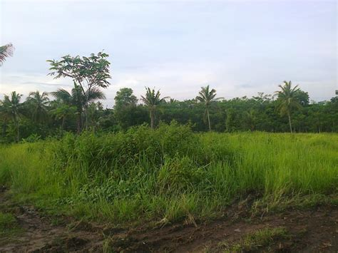 Sewa Ibebe Lolipop Daerah Serang tanah dijual jual tanah investasi waringin kurung serang cilegon