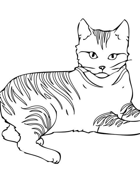dibujos para pintar con x gato con rayas para colorear im 225 genes y fotos