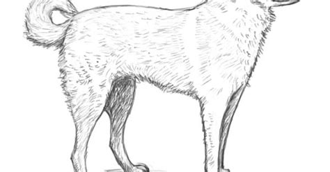sketsa hewan berkaki  gambar pemandangan