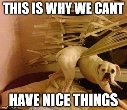 This Is Why Meme - 11 dog memes this is why we can t have nice things
