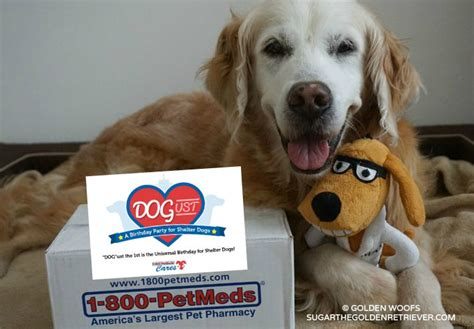 North Shore Animal League America Sweepstakes - join the 1 800 petmeds dogust birthday sweepstakes golden woofs