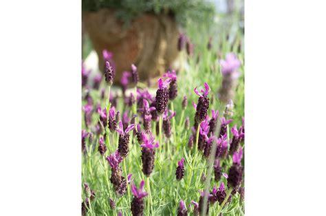 fiori sul terrazzo fiori e privacy sul terrazzo in citt 224 casafacile