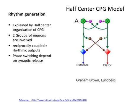 central pattern generator human locomotion central pattern generator in manta ray