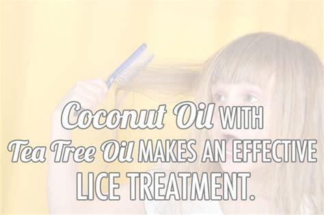 tea tree oil safe treatment for lice tea tree oil safe treatment for lice