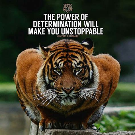 tiger quotes tiger motivational quotes great quotes collection