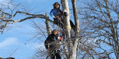 just monkeying around ski coaches hang from trees wearing sochi 2014 winter olympics us and canadian coaches don