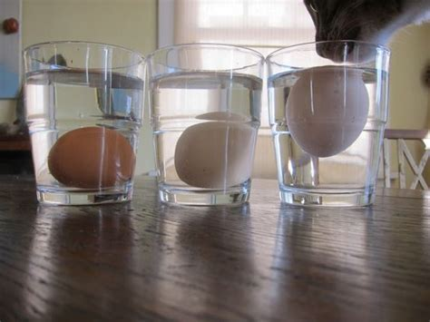 Fresh Eggs Float Or Sink In Water 18 clever food tips for your kitchen big chill