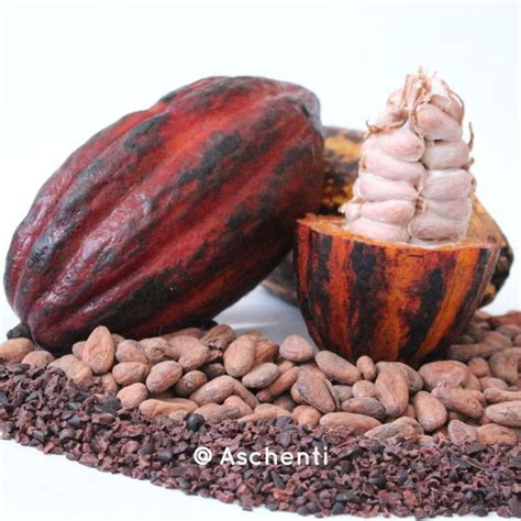 best cacao best 25 theobroma cacao ideas on cocoa fruit