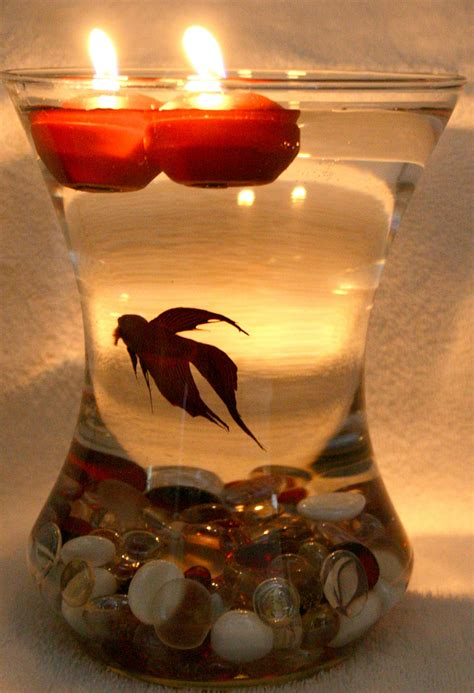 beautiful photos of wedding centerpieces with betta fish - When Can You Put Decorations Up
