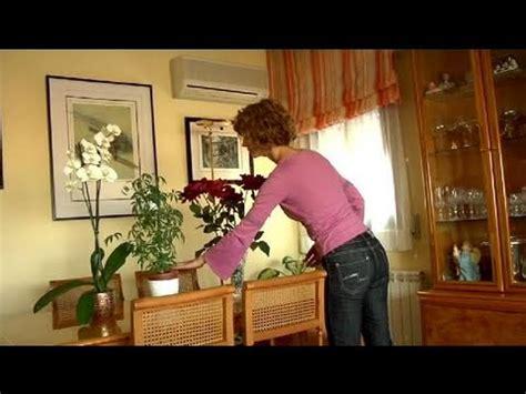 videos de como decorar tu casa c 243 mo adornar tu casa con plantas youtube