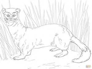 Ferret Coloring Pages To Print Coloring Pages Ferret Coloring Pages