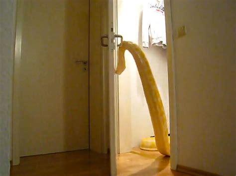 Snake Opening Door by Snake Opening Door Viral