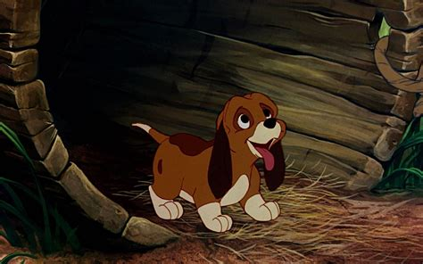 wallpapers fox the best high quality wallpapers best the fox and the hound hd wallpapers high quality all