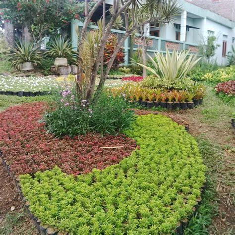 tanaman hias taman tukang taman hias murah tukang taman