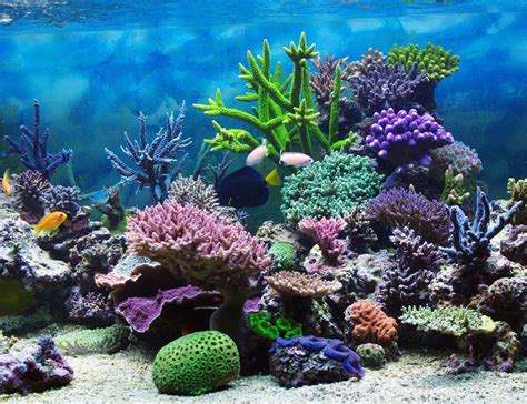 New Gambar Vivo Y35 Tatto most beautiful coral reef world underwater photo images