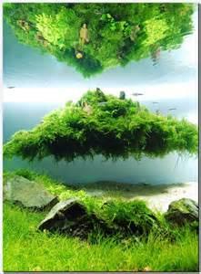 aquascaping plants floating island una pasada de concepci 243 n aquascaping